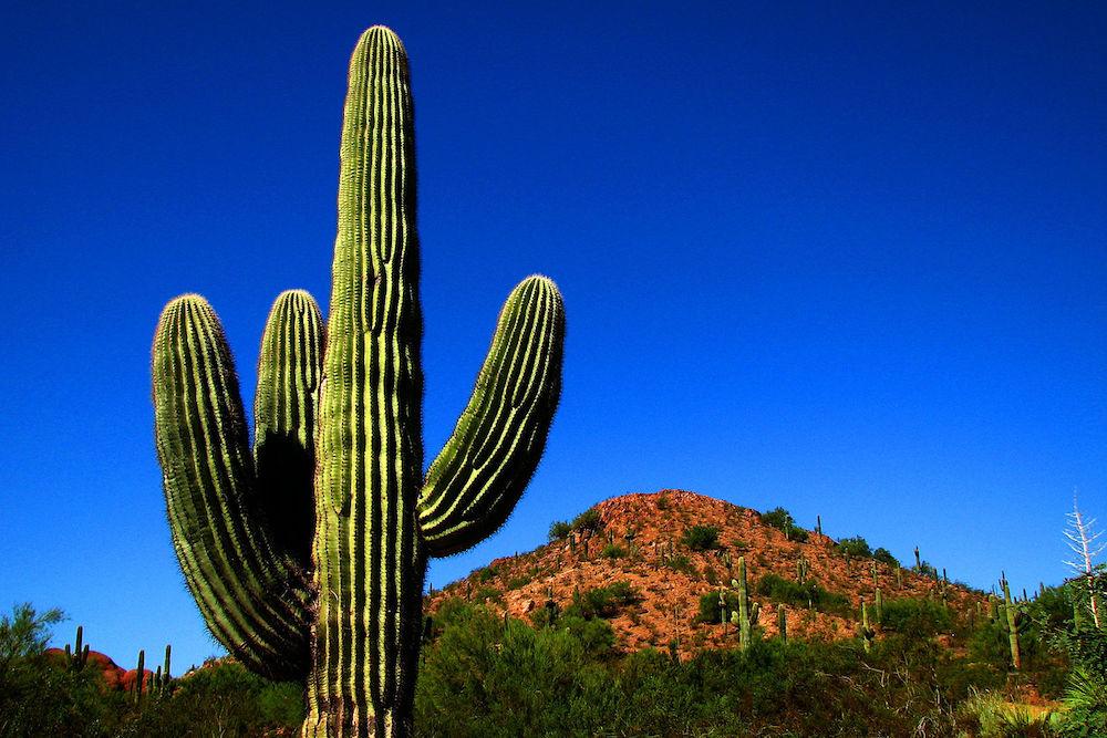 The Phoenix Desert Botanical Garden