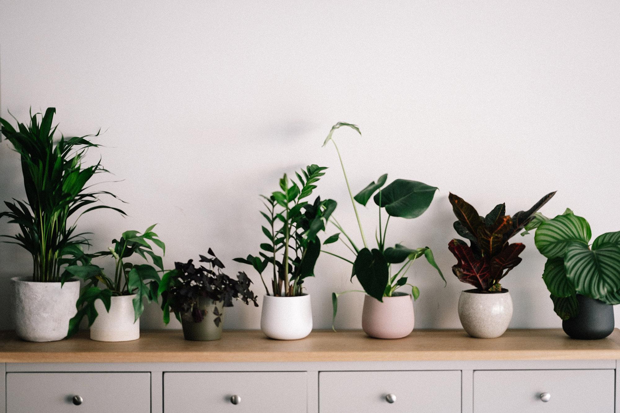 Small urban garden plants
