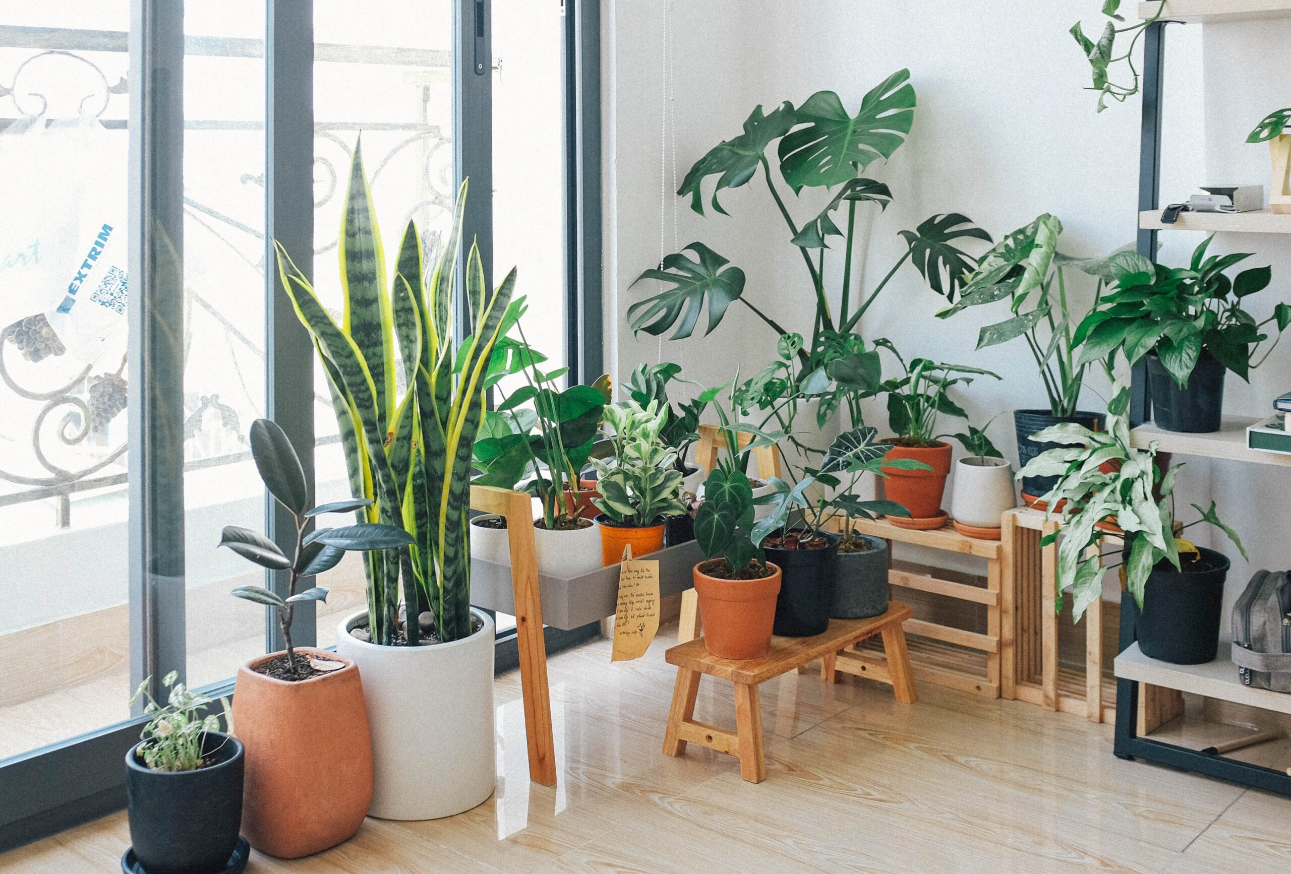 A variety of house plants sit in front of a window letting in bright light