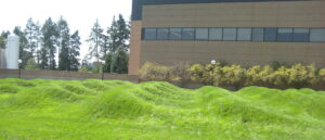 A field of grass appears to have wave shaped forms in the foreground with a building behind it